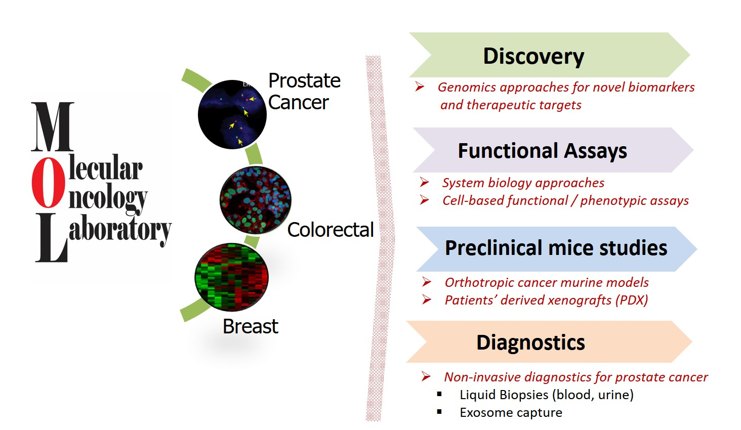Breast cancer molecular oncology