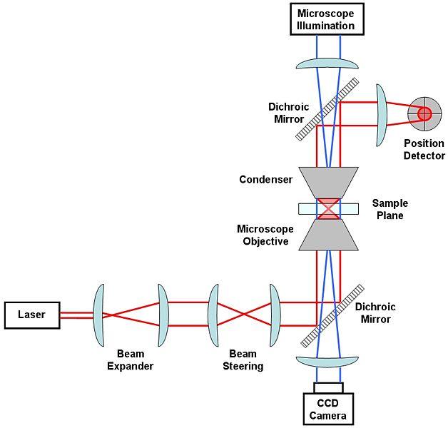 Ultrafast Laser Spectroscopy Department Of Chemistry